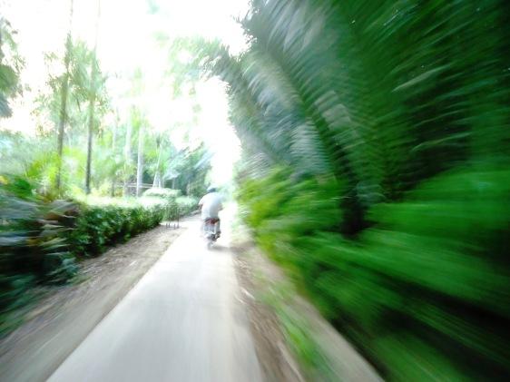 Con đường tuổi thơ Ngãi Hòa, Đại Ngãi, Trường Khánh quê hương Lương Định Của lung linh huyền thoại (ảnh Hoàng Kim)